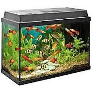 buy humesh fish aquarium green online get 20 off