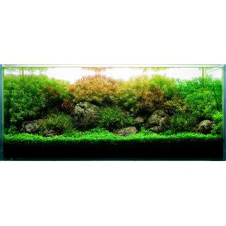 LIVE AQUATIC PLANTS !! BOX OF 8 POTS !!!