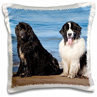 3dRose pc_192297_1 USA, California. Newfoundlands Sitting by The ocean Looking At You. - pillow Case, 16 by 16