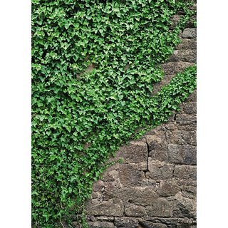 Komar 4-324 Ivy 4-Panel Wall Mural