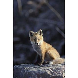 Wallmonkeys An Arctic Fox (alopex Lagopus) Poses on a Rock. - 30