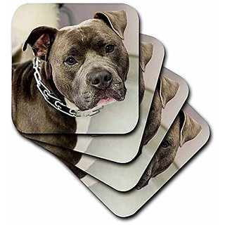 3dRose cst_173653_1 Pit Bull with Chain Collar Soft Coasters, Set of 4