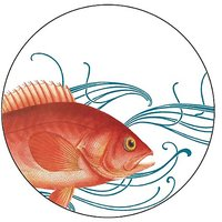 Caskata Studio 12 Count Paper Coasters In Box, Fish