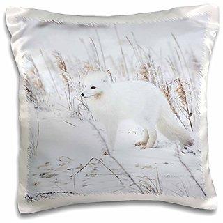 3dRose pc_205731_1 Arctic Fox in Winter Churchill Wildlife Management Area Churchill MB Pillow Case, 16