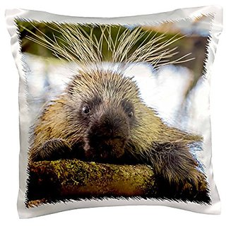 3dRose pc_210007_1 USA Alaska Glacier Bay NP Close-Up of Porcupine in a Tree Pillow Case, 16