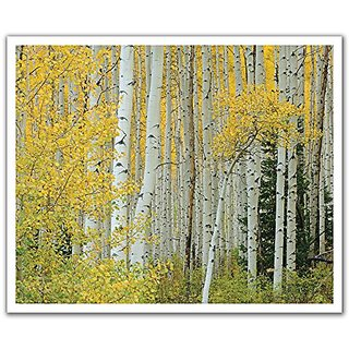 JP London POSLT2195 uStrip Lite Removable Wall Decal Sticker Mural Golden Birch Forest Tree Trunks, 24-Inch x 19.75-Inch