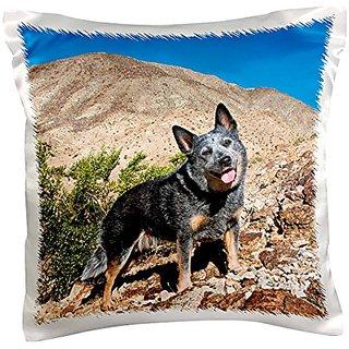 3dRose pc_88799_1 Australian Cattle Dog-US05 ZMU0118-Zandria Muench Beraldo-Pillow Case, 16 by 16