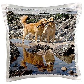3dRose pc_140452_1 Two Golden Retriever Dogs At A Beach Na02 Zmu0173 Zandria Muench Beraldo Pillow Case, 16