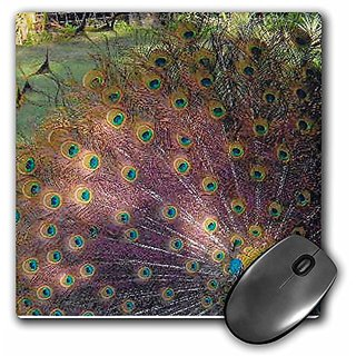3dRose LLC 8 x 8 x 0.25 Inches Mouse Pad, Hawaii Peacock (mp_23534_1)