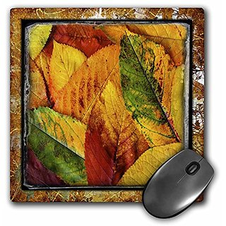 3dRose LLC 8 x 8 x 0.25 Inches Shabby Autumn Pattern Mouse Pad (mp_48124_1)