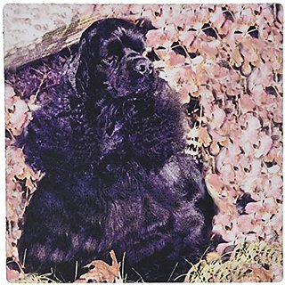 3dRose LLC 8 x 8 x 0.25 Inches Mouse Pad, Black Cocker Spaniel (mp_801_1)