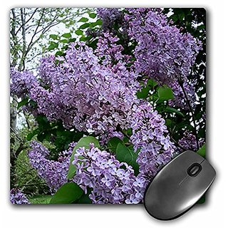 3dRose LLC 8 x 8 x 0.25 Inches Mouse Pad, Flowers (mp_3139_1)