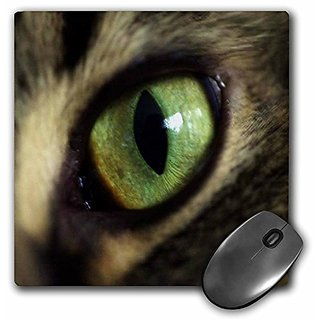 3dRose LLC 8 X 8 X 0.25 Inches Eye of Cat Mouse Pad (mp_23961_1)