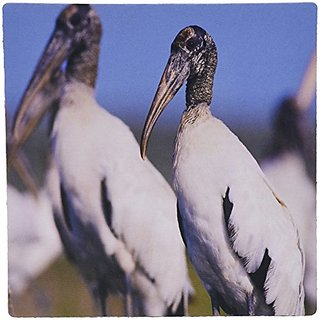 3dRose LLC 8 x 8 x 0.25 Wood Stork Bird Lake Corpus Christi Texas Rolf Nussbaumer Mouse Pad (mp_84646_1)