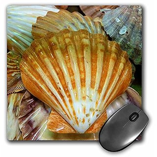 3dRose LLC 8 x 8 x 0.25 Inches Mouse Pad, Sea Shells Up Close (mp_24001_1)