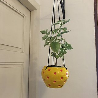 DOTTED HANGING POT -Yellow