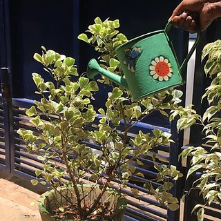 Designer water can-Green