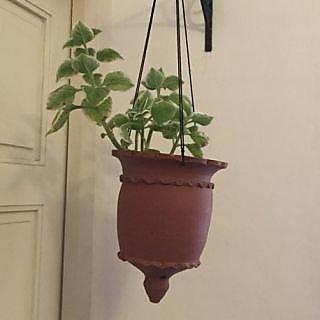 Chakli Hanging Pot