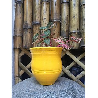 SMALL POT - YELLOW