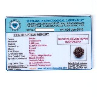 7 Mukhi Rudraksha Lab Certified