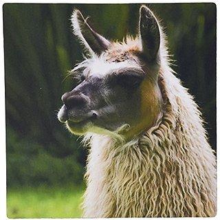3drose Ecuador, Otavalo, Hacienda Cousin, Llama - SA07 CMI0290 - Cindy Miller Hopkins - Mouse Pad