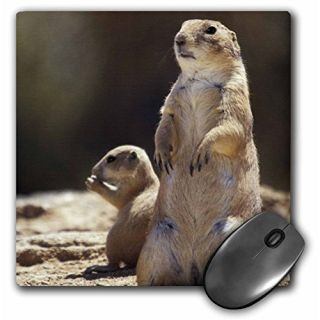 3dRose LLC 8 x 8 x 0.25 Inches Tailed Prairie Dog Wildlife Arizona John and Lisa Merrill Mouse Pad Black (mp_87944_1)