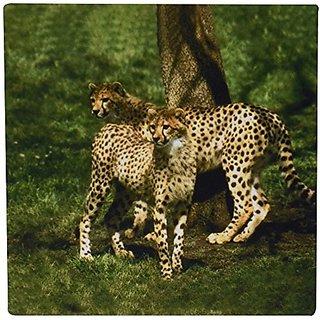 3dRose LLC 8 x 8 x 0.25 Inches Mouse Pad, Cheetah (mp_643_1)