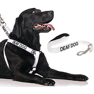 DEAF DOG White Color Coded L-XL Non-Pull Dog Harness and 2 4 6 Foot Padded Leash Sets (No/Limited Hearing) PREVENTS Acci