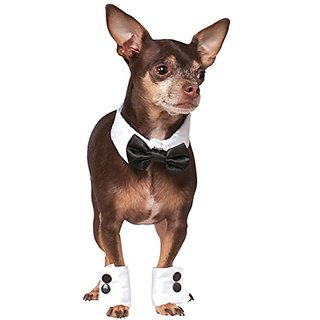 Rubies Costume Company Bowtie and Cuff Pet Accessories Set, Small/Medium