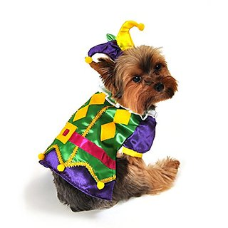 Anit Accessories AP1089-M Royal Harlequin Dog Costume