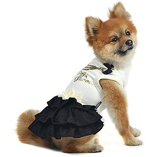 Dogs of Glamour Rodeo Drive Dress, Small, Black