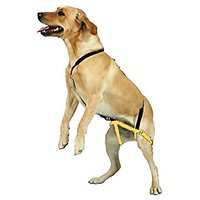 NEW No Jump Dog Harness, Anti Jump Pet Harness, Stop Jumping, Training Harness For Dogs, By Downtown Pet Supply