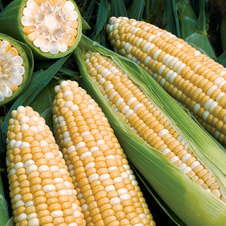 Corn seeds x 2 pack