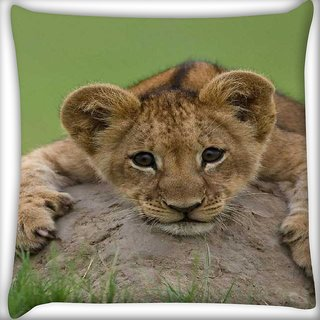 Snoogg Baby Lion Digitally Printed Cushion Cover Pillow 16 x 16 Inch