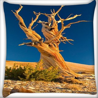 Snoogg Tree Without Leaves Digitally Printed Cushion Cover Pillow 16 x 16 Inch