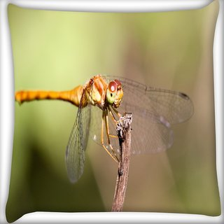 Snoogg Orange Dragonfly Digitally Printed Cushion Cover Pillow 16 x 16 Inch