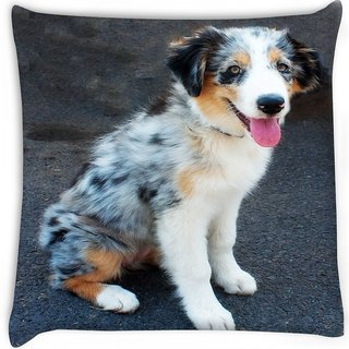 Snoogg  australian shepherd puppy  Digitally Printed Cushion Cover Pillow 16 x 16 Inch