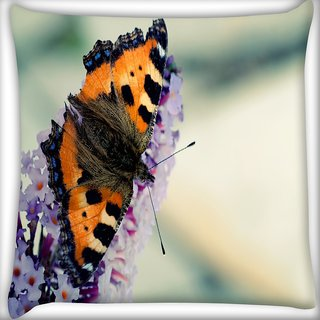Snoogg Butterfly In White Flower Digitally Printed Cushion Cover Pillow 16 x 16 Inch