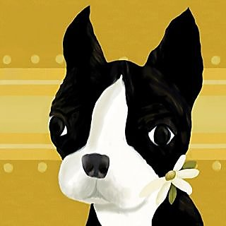 Oopsy daisy bea the boston terrier stretched canvas wall art by meghann ohara, 10 by 10-inch