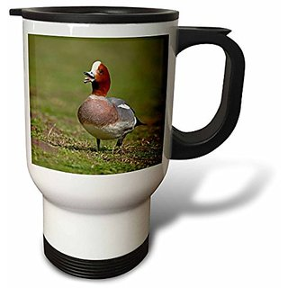 3dRose Wigeon Bird Walking on Grass England, Stainless Steel Travel Mug, 14-Oz