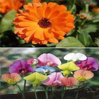 Beautiful Combo 2 Types Winter Season Flower Plant Seeds