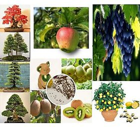 Combo Pack of 4 Types Bonsai Tree and 4 Types Bonsai Fruit Tree Seeds