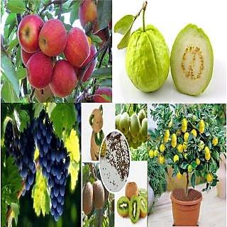 Combo of 6  Bonsai Fruits Tree Seeds