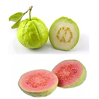 Two Types Guava Fruit Seeds
