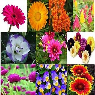 Beautiful Combo 10 Types Winter Season Flower Plant Seeds