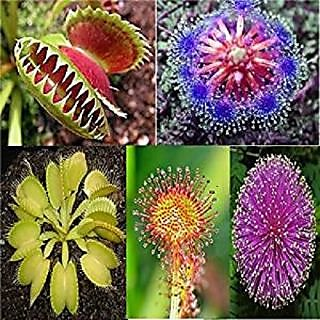 Flytrap Carnivorous DroseraSundew Dionaea6 Different Type of Seeds
