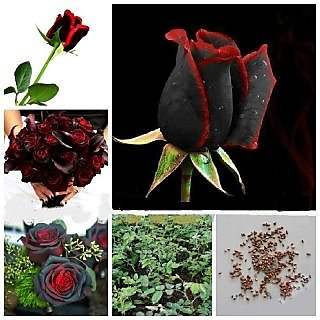 Rose Mix + Attractive Bonsai Red  Black Rose Plant Seeds
