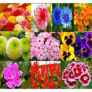 Beautiful Combo 10 Types Winter Season Flower Plant  Seeds