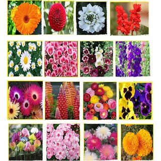 Beautiful Combo 16 Types Winter Season Flower Plant Seeds