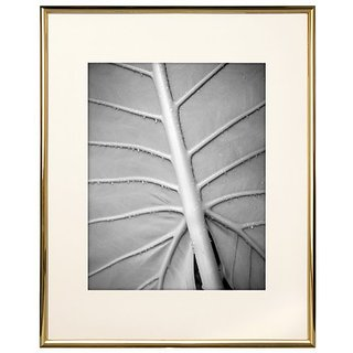 MCS Gallery Gold Coloured Aluminum 11 by 14-Inch Frame with 8 by 10-Inch Mat Opening